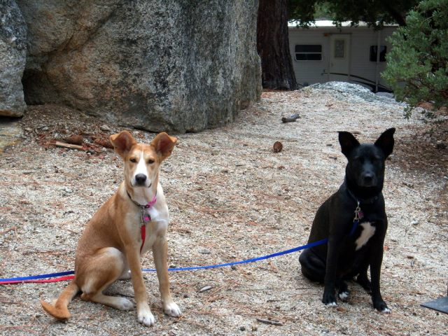 Our dogs, Kona and Roxy